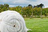 Roll of cover net to protect ripe grapes