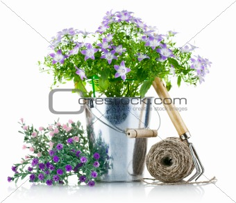 garden equipment with violet flowers and green leaves