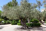 Olive Garden in Emmaus