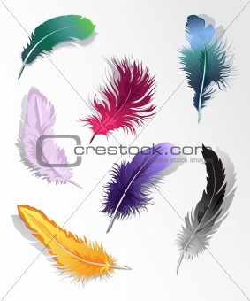 Multicolored feather's set
