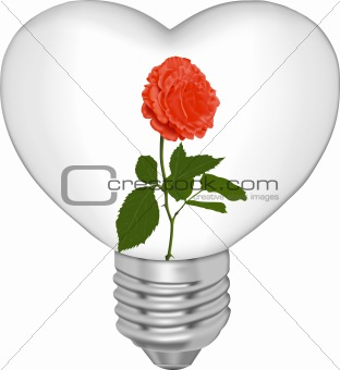 Bulb in the form of heart and in it a flower