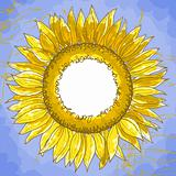 The contour drawing flower sunflower against a blue background. Can be used as background for invitation cards..
