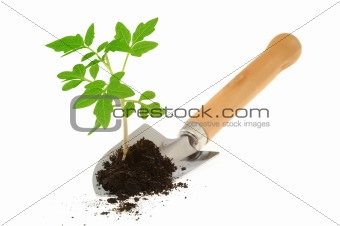 Tomato seedling on garden trowel, isolated on white