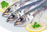 Three raw mackerel in the macro.