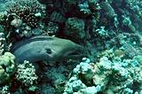 moray eel in reef