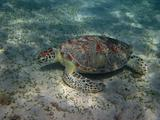 sea turtle eat