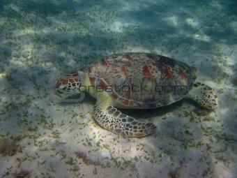 sea turtle eat