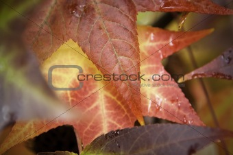 Bright Autumn Leaves