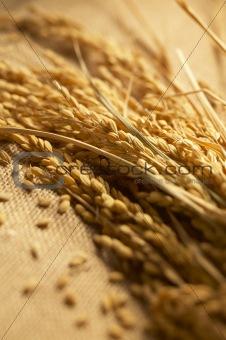 wheat lay on linen
