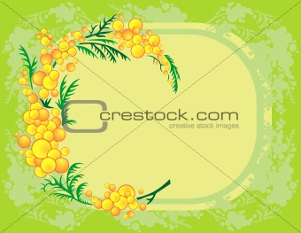 Abstract mimosa branch with background