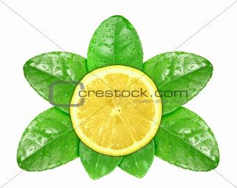 Lemon fruit on green leaf with dew