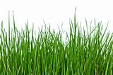 Grass on white background horizontal