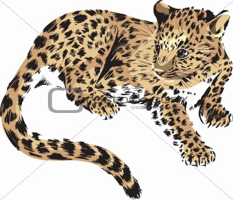panther, cub of a wild cat