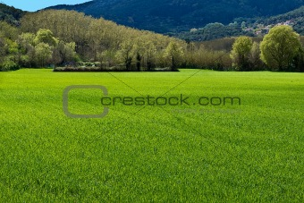 green spring outbreak