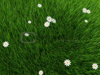 gras field