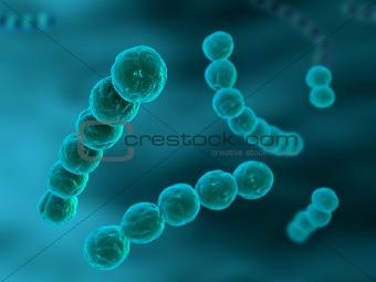 streotococcus