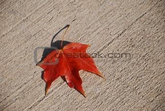 Autumn Sign.