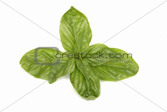 green leaves on the white background