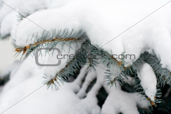 Branches of a winter