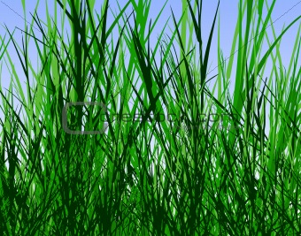 image 475347 grass jungle from crestock stock photos