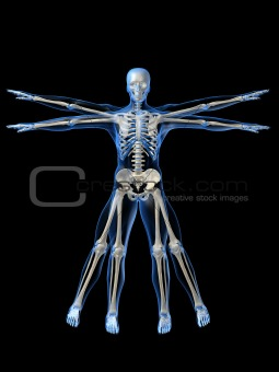 skeleton-da vinci style