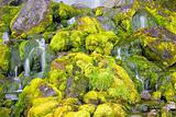 Green mossy waterfall