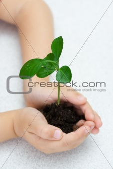 Small green plant in children's palms, over white