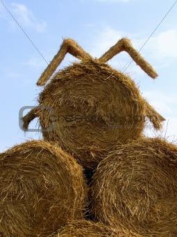 sheaf of hay