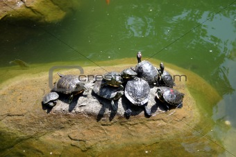 A group of turtles