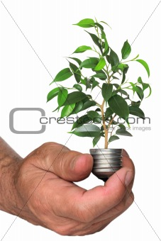 tree growing from the base of the light bulb in hand