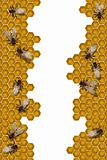 Bees working frame