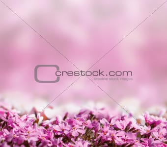 background with pink blossoming flowers
