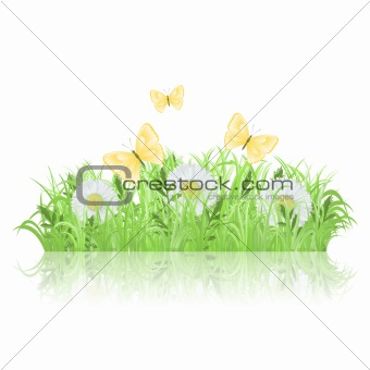 Green grass with white flowers and butterflies