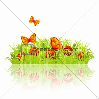 Green grass with red flowers and butterflies