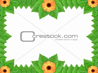 Floral frame with orange flowers and green leaf