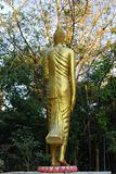 back of golden buddha statue