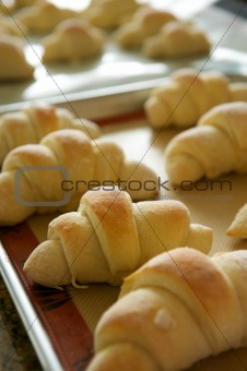 A Tray of Rolls Taken Fresh from the Oven