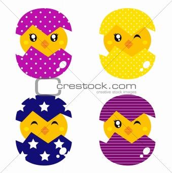 Spring chicken in eggs set
