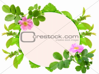 Frame with pink dog-rose flowers