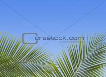 The palm trees against the blue sky