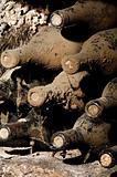 Old bottles in a cellar