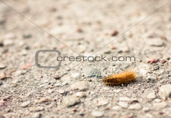 Closeup of a caterpillar on the ground