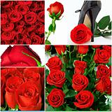 collage from 6 holiday photos with red roses