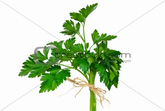 Parsley Bouquet