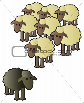 Black Sheep and Flock