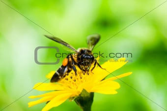 bee in macro green nature