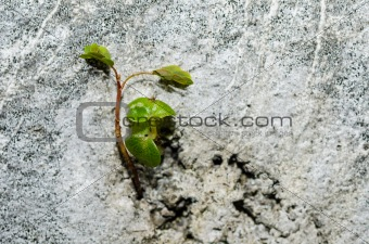 The Plant on a White Wall Background