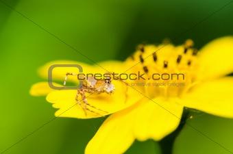 spider macro in nature