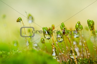 Fresh moss macro in green nature