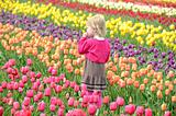 Child in tulip field